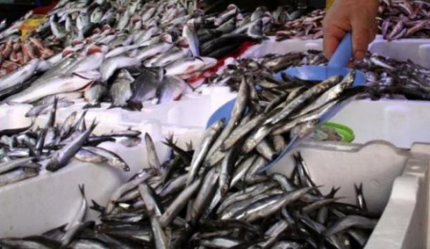 Balık bol ama tüketim kısıtlı
