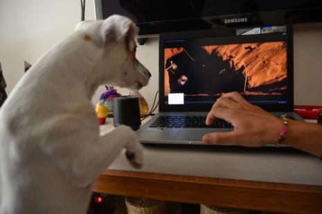 Bu köpek sosyal medyada büyük ilgi gördü