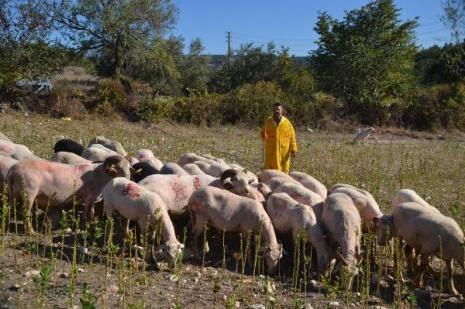Koyunlarını CHPli yaptı