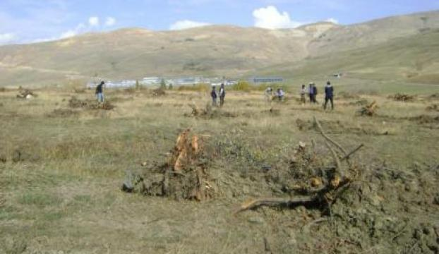 2500 elma ağacı kesildi